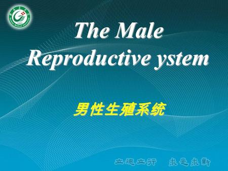 The Male Reproductive ystem 男性生殖系统. Composition The Male or female Reproductive System consists of two parts : Ⅰ.Internal genital organs 内生殖器 Gonads (sex.