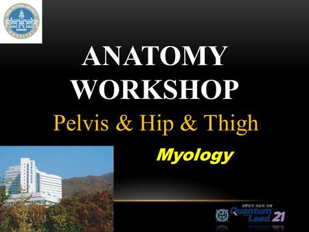 Anatomy Workshop Pelvis & Hip & Thigh Myology.