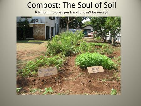 Compost: The Soul of Soil 6 billion microbes per handful can't be wrong!