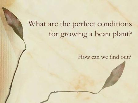What are the perfect conditions for growing a bean plant? How can we find out?