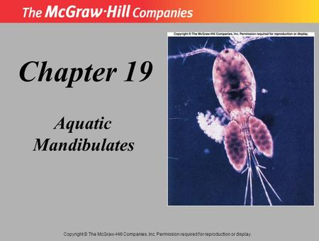 Copyright © The McGraw-Hill Companies, Inc. Permission required for reproduction or display. Chapter 19 Aquatic Mandibulates.