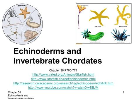 Echinoderms and Invertebrate Chordates