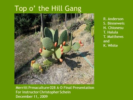 Top o' the Hill Gang Merritt Prmaculture 028 A-D Final Presentation For Instructor Christopher Schein December 11, 2009 R. Anderson S. Binneweis N. Chionesu.