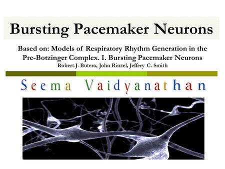 Bursting Pacemaker Neurons Based on: Models of Respiratory Rhythm Generation in the Pre-Botzinger Complex. I. Bursting Pacemaker Neurons Robert.J. Butera,