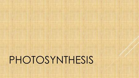 PHOTOSYNTHESIS. Photosynthesis is the process in which a plant converts sunlight into energy.