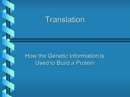 Translation How the Genetic Information Is Used to Build a Protein.