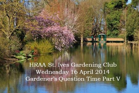 HRAA St. Ives <strong>Gardening</strong> Club Wednesday 16 April 2014 <strong>Gardener</strong>'s Question Time Part V.