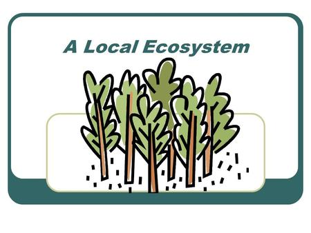 A Local Ecosystem. Abiotic features of the environment Abiotic features are the non-living components of the environment. They include, Physical features: