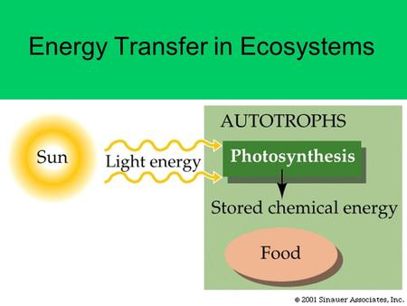 Energy Transfer in Ecosystems. Producers… Are autotrophs that convert energy entering the ecosystem so other organisms can use it –Ex. Plants, protists,