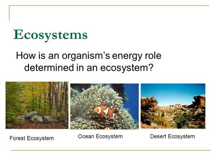 How is an organism's energy role determined in an ecosystem?