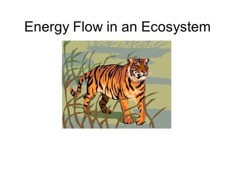 Energy Flow in an Ecosystem. Anticipation Guide Think about the vocabulary words. DO you know any of them? Do you recognize a part of a word? Can you.