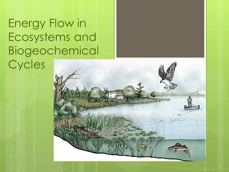 Energy Flow in Ecosystems and Biogeochemical Cycles.