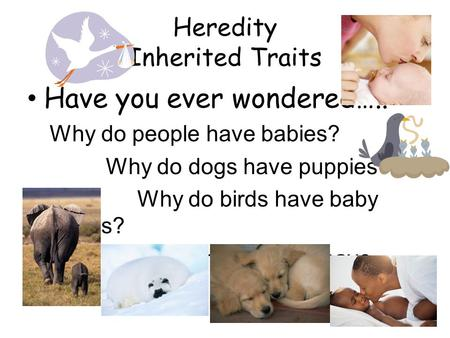 Heredity Inherited Traits Have you ever wondered….. Why do people have babies? Why do dogs have puppies? Why do birds have baby birds? Why do seals have.
