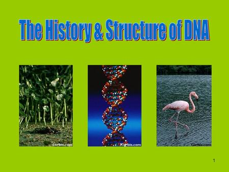 1 History Before the 1940's scientists didn't know what material caused inheritance. They suspected it was either DNA or proteins.