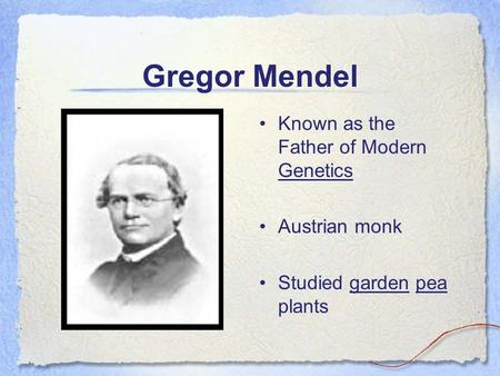 Gregor Mendel Known as the Father of Modern Genetics Austrian monk Studied garden pea plants.