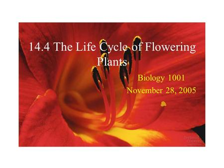 14.4 The Life Cycle of Flowering Plants Biology 1001 November 28, 2005.