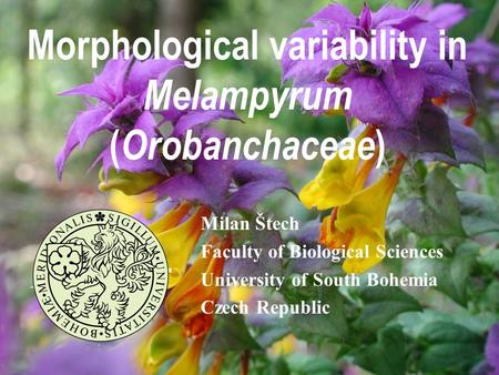 Morphological variability in Melampyrum ( Orobanchaceae ) Milan Štech Faculty of Biological Sciences University of South Bohemia Czech Republic.