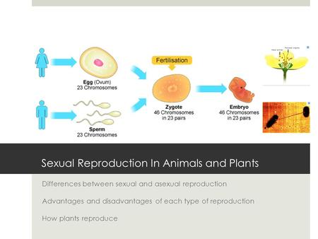 Sexual Reproduction In Animals and Plants Differences between sexual and asexual reproduction Advantages and disadvantages of each type of reproduction.