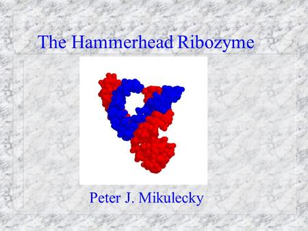 The Hammerhead Ribozyme Peter J. Mikulecky. What is a Ribozyme? 1) Enzyme 2) Ribonucleic Acid NOT PROTEIN 1989 Nobel Prize In Chemistry Sid AltmanTom.