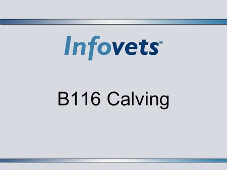 B116 Calving. Infovets Educational Resources – www.infovets.com – Slide 2 Stage 1 Labor:  Visible signs of early labor may or may not be seen in mature.