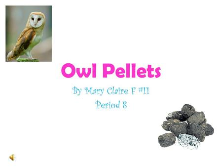 Owl Pellets By Mary Claire F #11 Period 8 Introduction Silent FlightSharp Talons Hearing.