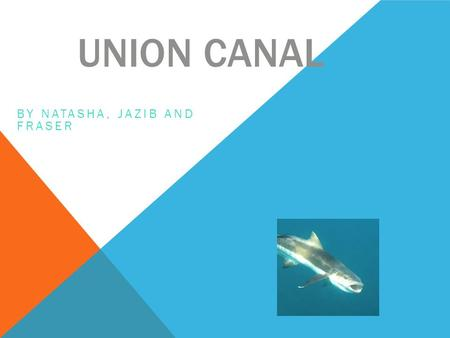 UNION CANAL BY NATASHA, JAZIB AND FRASER. Life at the union canal is great. It was built over 200 years ago. The union canal goes to the kelpies.