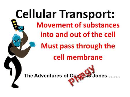 Cellular Transport: Movement of substances into and out of the cell Must pass through the cell membrane The Adventures of Osmosis Jones…….. X.