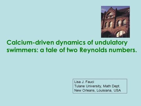Lisa J. Fauci Tulane University, Math Dept. New Orleans, Louisiana, USA Calcium-driven dynamics of undulatory swimmers: a tale of two Reynolds numbers.