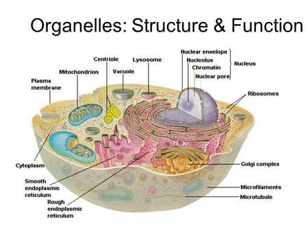 plasma membrane structure and function pdf