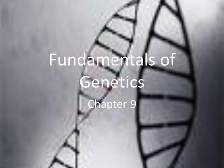 Fundamentals of Genetics Chapter 9. Trait DescriptionClass numbers Tongue rolling Dimples Widow ' s peak Hitchhiker ' s Thumb Hand clasping, left over.