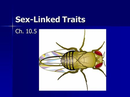 Sex-Linked Traits Ch. 10.5. Sex-Linked Genes Sex chromosomes: X and Y Sex chromosomes: X and Y (male: XY, female: XX) (male: XY, female: XX) Offspring.
