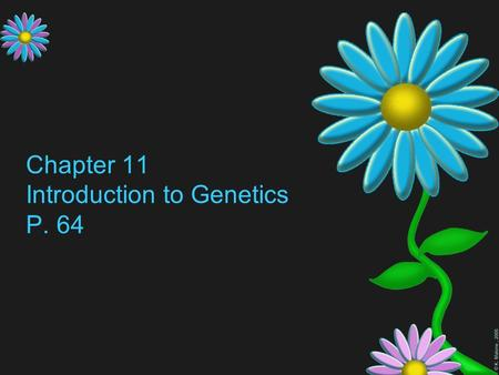 © K. Malone, 2005 Chapter 11 Introduction to Genetics P. 64.