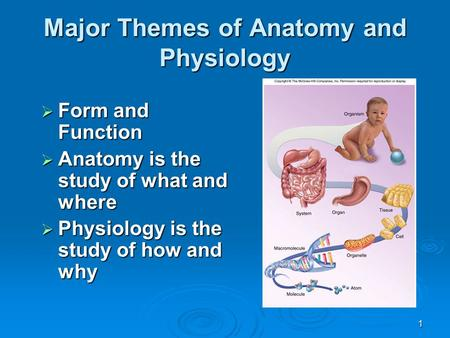 1 Major Themes of Anatomy and Physiology  Form and Function  Anatomy is the study of what and where  Physiology is the study of how and why.