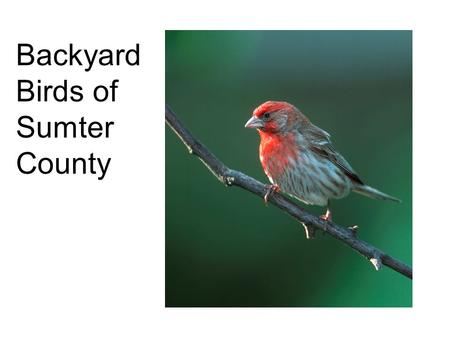 Backyard Birds of Sumter County So, what do you need?