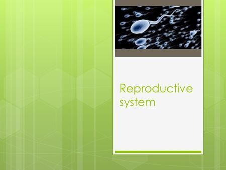 Reproductive system.  The purpose of the reproductive system is to ensure the perpetuation of the species.