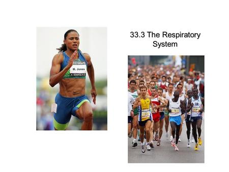 Lesson Overview Lesson Overview The Respiratory System 33.3 The Respiratory System.