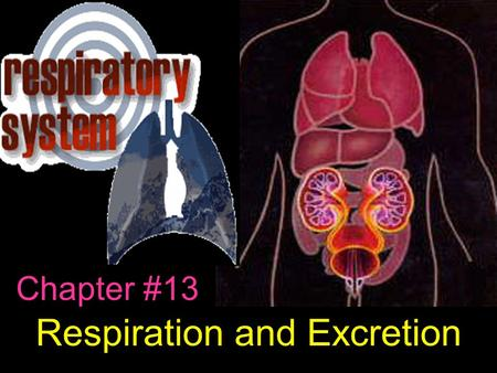 Chapter #13 Respiration and Excretion. Chapter 13.1 Notes Respiratory system is made of body parts that help with the exchange of gases. Brings in oxygen.
