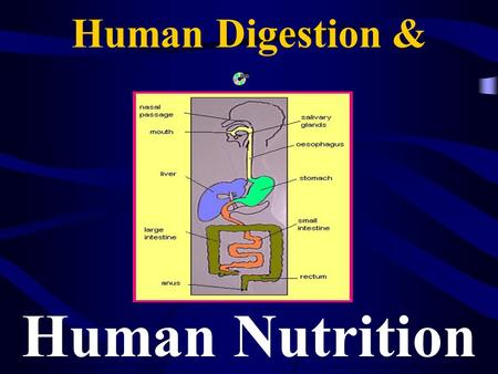 Human Digestion & Human Nutrition. Nutrition All the activities by which an organism obtains and uses food for growth and repair of cells.