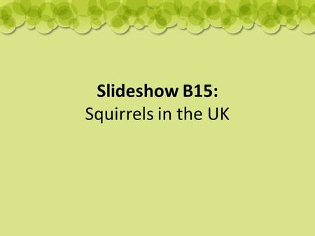 Slideshow B15: Squirrels in the UK. Red and Grey Squirrels Grey squirrels were introduced from America in the early 1900s. This has resulted in them becoming.