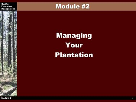 Conifer Plantation Management Module 2 1 Managing Your Plantation Module #2.