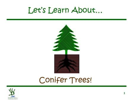 1 Let's Learn About… Conifer Trees!. 2 What Is a Conifer Tree? Has cones Has needles –Needles stay green year round until they die Has soft wood Has seeds.
