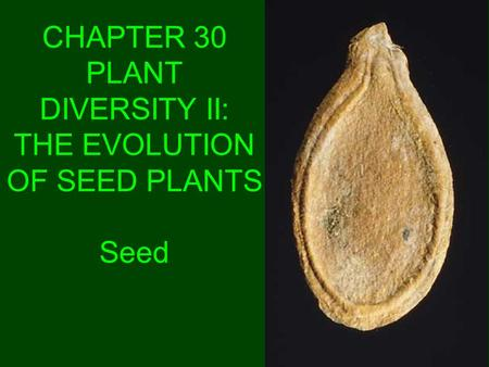 CHAPTER 30 PLANT DIVERSITY II: THE EVOLUTION OF SEED PLANTS Seed.