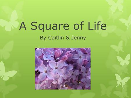 A Square of Life By Caitlin & Jenny. Our Environment Some of the bugs that we found in our square were small black ants, may flies, black flies, mosquitoes,