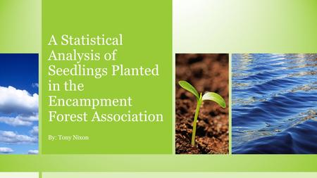 A Statistical Analysis of Seedlings Planted in the Encampment Forest Association By: Tony Nixon.