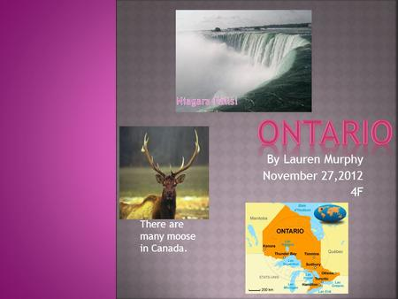 By Lauren Murphy November 27,2012 4F There are many moose in Canada.