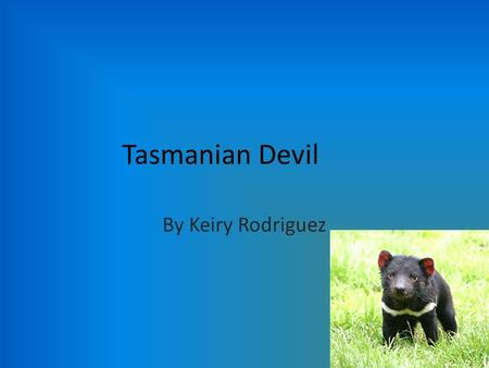 Tasmanian Devil By Keiry Rodriguez. General Information Tasmanian devils can be found in the Australian island called Tasmania. Tasmanian devils shelter.