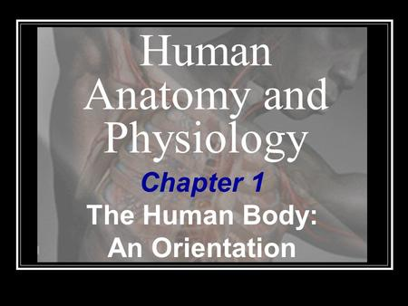 Human Anatomy and Physiology Chapter 1 The Human Body: An Orientation.