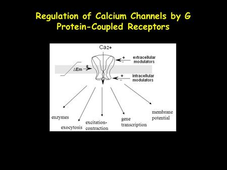 Regulation of Calcium Channels by G Protein-Coupled Receptors enzymes excitation- contraction gene transcription membrane potential exocytosis.