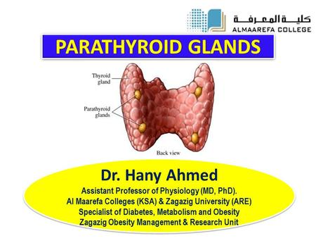 Dr. Hany Ahmed Assistant Professor of Physiology (MD, PhD). Al Maarefa Colleges (KSA) & Zagazig University (ARE) Specialist of Diabetes, Metabolism and.