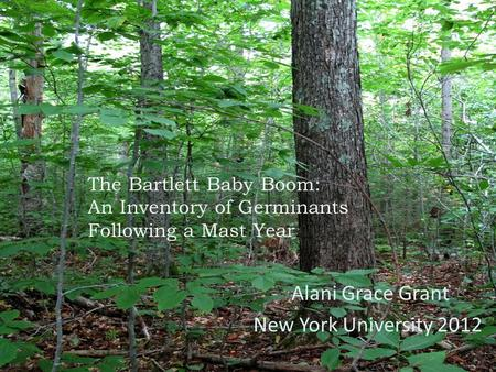 The Bartlett Baby Boom: An Inventory of Germinants Following a Mast Year Alani Grace Grant New York University 2012.